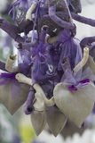Lavender hearts Royalty Free Stock Image