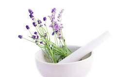 Lavender herb Royalty Free Stock Image