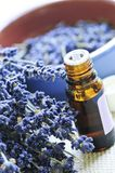Lavender herb and essential oil Stock Images