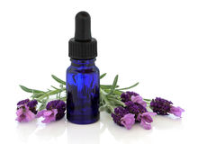 Lavender Herb Flower Essence Stock Photo