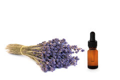 Lavender Herb Flower Essence Stock Image