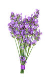 Lavender Herb Flower Posy. Isolated over white background. Lavandula Royalty Free Stock Images