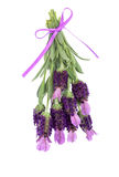 Lavender Herb Flowers. And leaf sprigs tied with a lilac ribbon, over white background stock photos