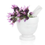 Lavender Herb Flowers Royalty Free Stock Image