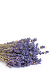 Lavender Herb Flowers Stock Images