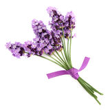 Lavender Herb Stock Photography