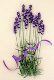 Lavender Herb Flowers Royalty Free Stock Photography