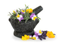 Lavender Herb and Viola Flowers Stock Images