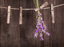 Lavender herbs drying. On the wooden background Royalty Free Stock Image