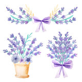 Lavender and herbs in flowerpot royalty free illustration