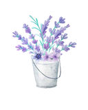 Lavender and herbs in metal bucket Royalty Free Stock Images