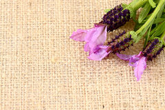 Lavender hessian 2 Royalty Free Stock Photography