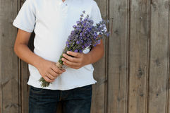 Lavender in hnds Stock Photos