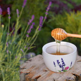 Lavender honey Royalty Free Stock Images