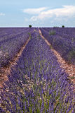 Lavender horizon Royalty Free Stock Photo