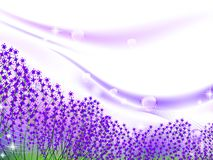 Lavender inspiration Royalty Free Stock Photography