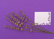 Lavender invitation background with copy space Royalty Free Stock Images