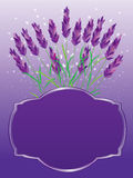 Lavender Invitation Card_eps. Illustration of lavender with invitation frame. --- This .eps file info Version: Illustrator 8 EPS Document: 9 * 12 Inches (Width Royalty Free Illustration