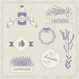Lavender, Isolated herb Royalty Free Stock Photos