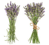 Lavender isolated on white background. Fresh provencal flowers Royalty Free Stock Photos