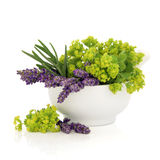 Lavender and Ladies Mantle Flowers Royalty Free Stock Images