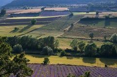 Lavender landscape Stock Image