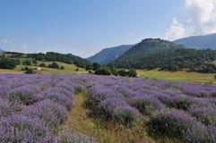 Lavender landscape Royalty Free Stock Image