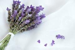 Lavender Lavandula Augustifolia ανθοδεσμών κλαδάκι δεσμών Στοκ Φωτογραφία