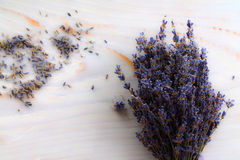 Lavender lavender background. Classical plant - the purple wonder Stock Photography