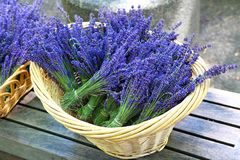 Lavender. In a basket on sale royalty free stock images