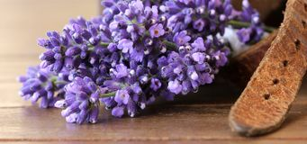 Lavender and leather Stock Images