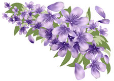 Lavender with leaves Royalty Free Stock Photos