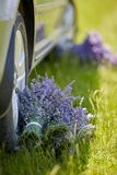 Lavender left in the shade by a car. Lavender bouquets left in the shade of a car stock images