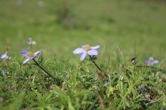 Lavender Love Stock Photo