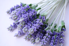Lavender lying on table. A bunch lavender lying on table Stock Photography