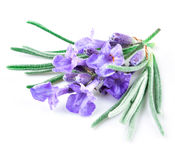 Lavender macro Stock Photography