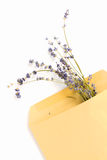 Lavender mail Stock Images