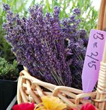 Lavender at Marketplace Royalty Free Stock Image