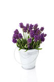 Lavender in a metal bucket Stock Photo
