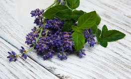 Lavender and mint. On a old wooden table Stock Image