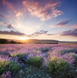 Lavender in the mountain valley during sunset Stock Images