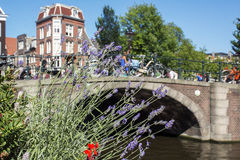 Lavender near the old bridge over the canal in the day Royalty Free Stock Images