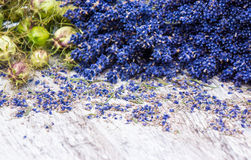 Lavender and Nigella Stock Images