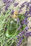 Lavender oil fresh flowers homeopathic herbs Royalty Free Stock Images