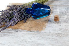 Lavender oil in a glass bottle Stock Photos