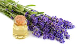Lavender oil in transparent glass bottle with lavender flowers on a white background. Lavender oil in transparent glass bottle with lavender flowers bunch on a stock photography