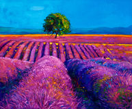 Lavender. Original oil painting of lavender fields on canvas.Modern Impressionism Stock Photography