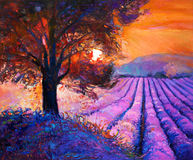 Lavender. Original oil painting of lavender fields on canvas.Rich golden Sunset landscape.Modern Impressionism Stock Photos