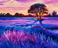 Lavender. Original oil painting of lavender fields on canvas.Rich purple  Sunset landscape.Modern Impressionism Royalty Free Stock Image