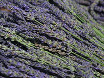 Lavender. In the Outdoor Market Stock Photography